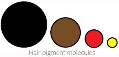 lighter hair: hair pigment molecules