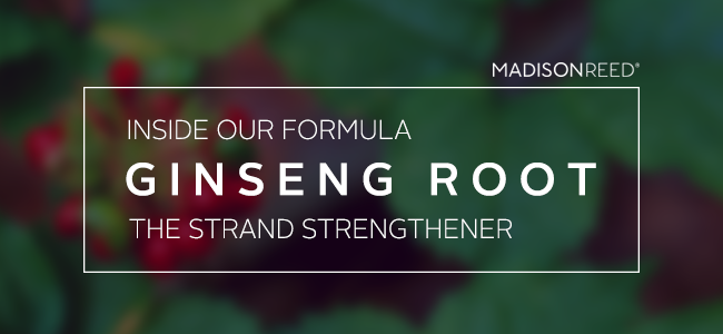 Inside Our Formula: Ginseng the Strand Strengthener