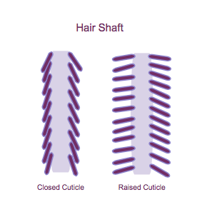 hair cuticles